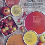 Tomato Hues Paint Colors