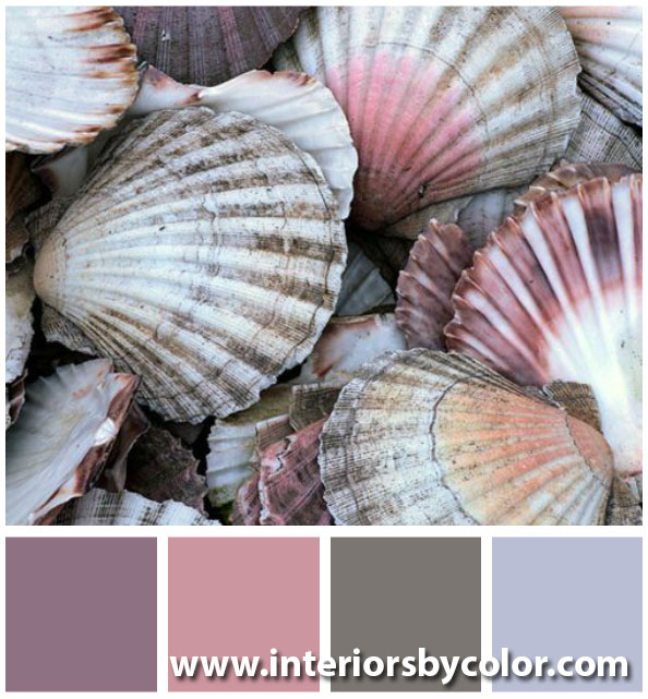 pink gray seashell color palette http://www.interiorsbycolor.com/