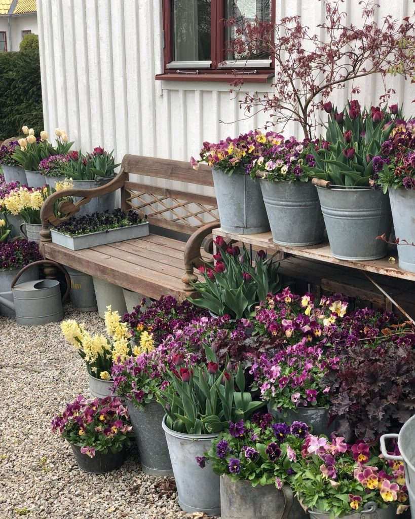 Cluster of planted pots of pansies and tulips