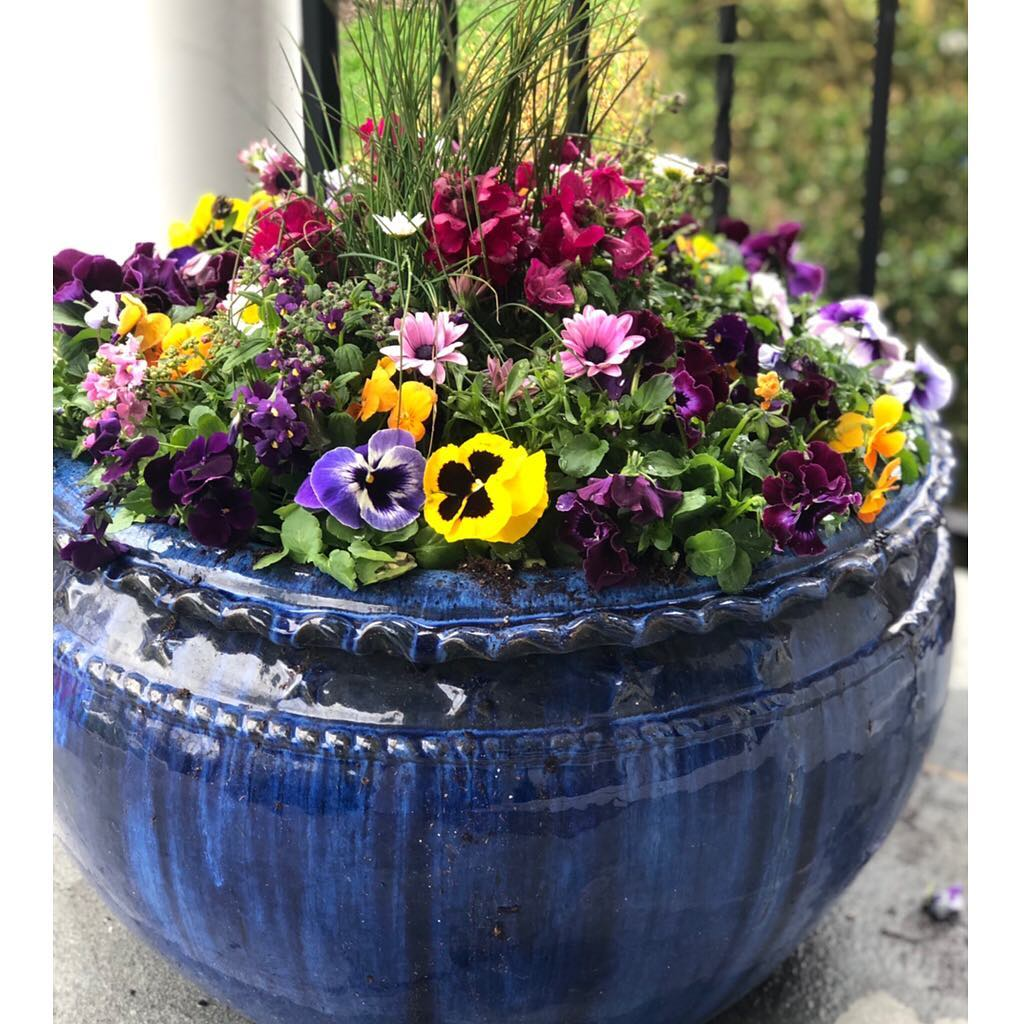 Glazed blue pot with pansies