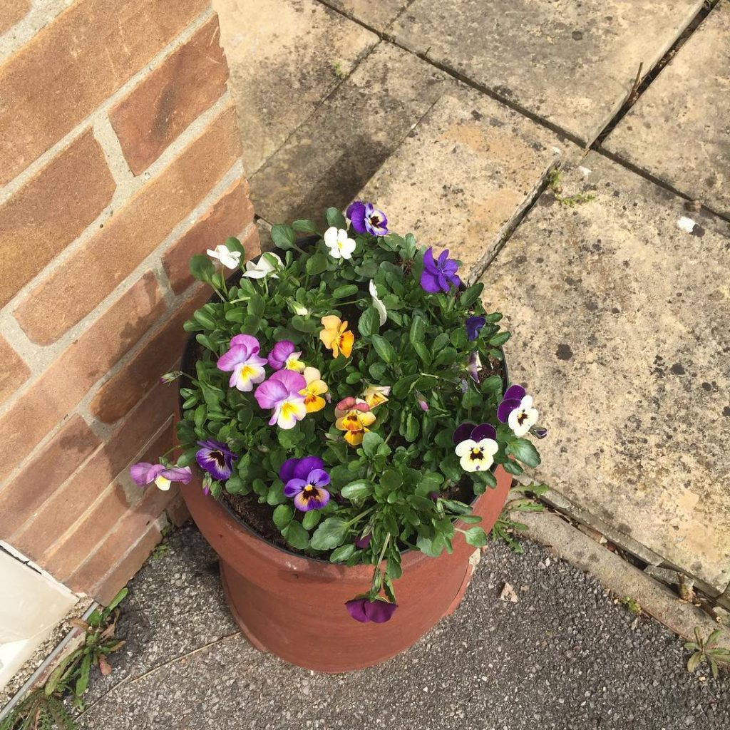 recycled chimney pot with pansies