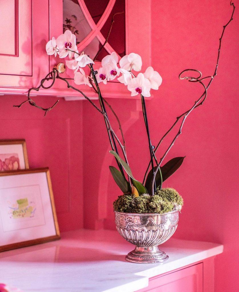 Benjamin Moore Pink Starburst paint kitchen