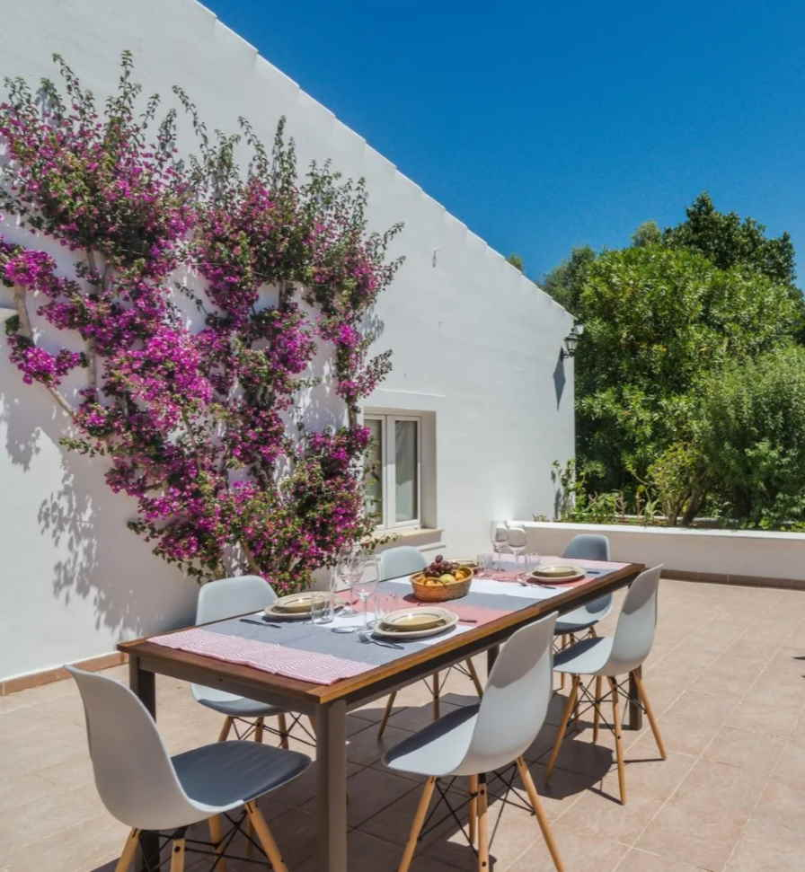 Bougainvillea growing on a white wall patio