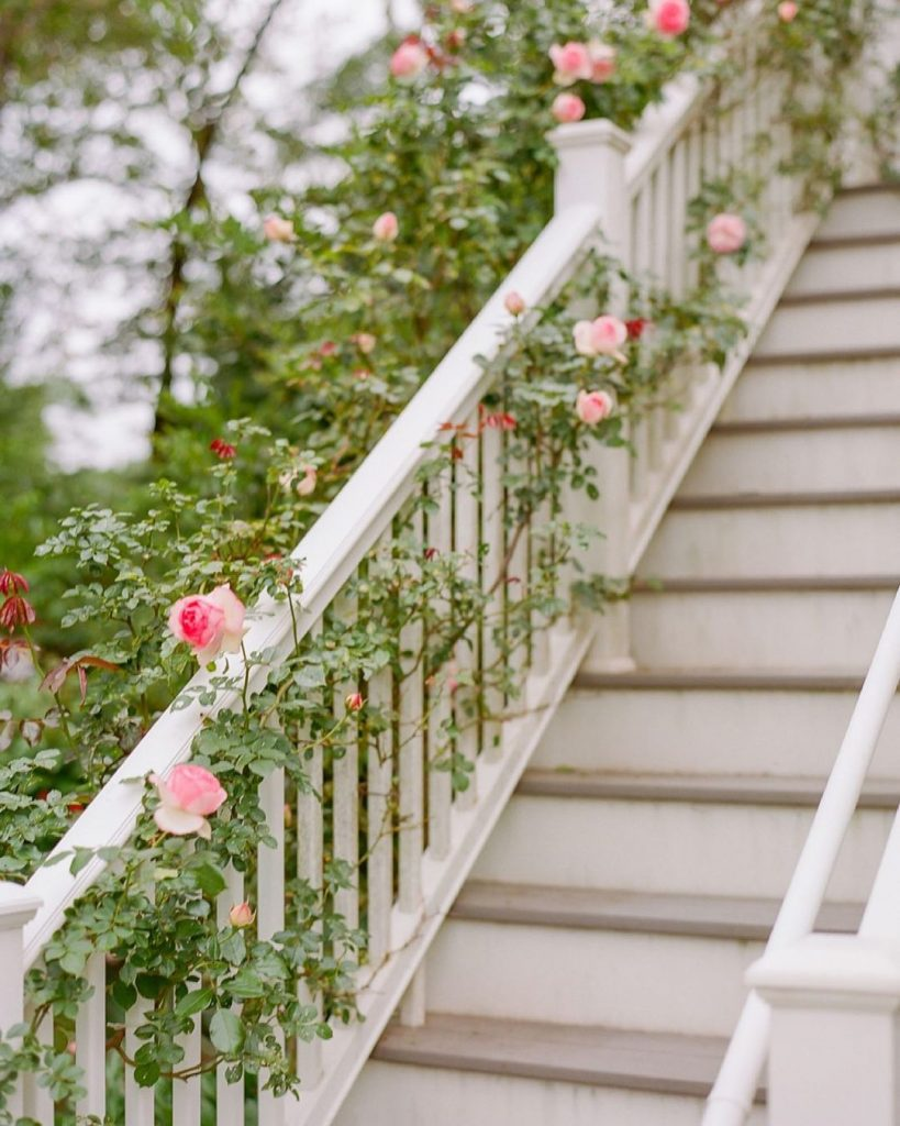 Banister covered in pink climbing roses