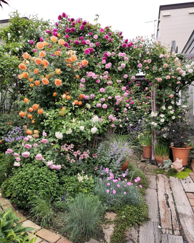 Japanese rose garden climbing