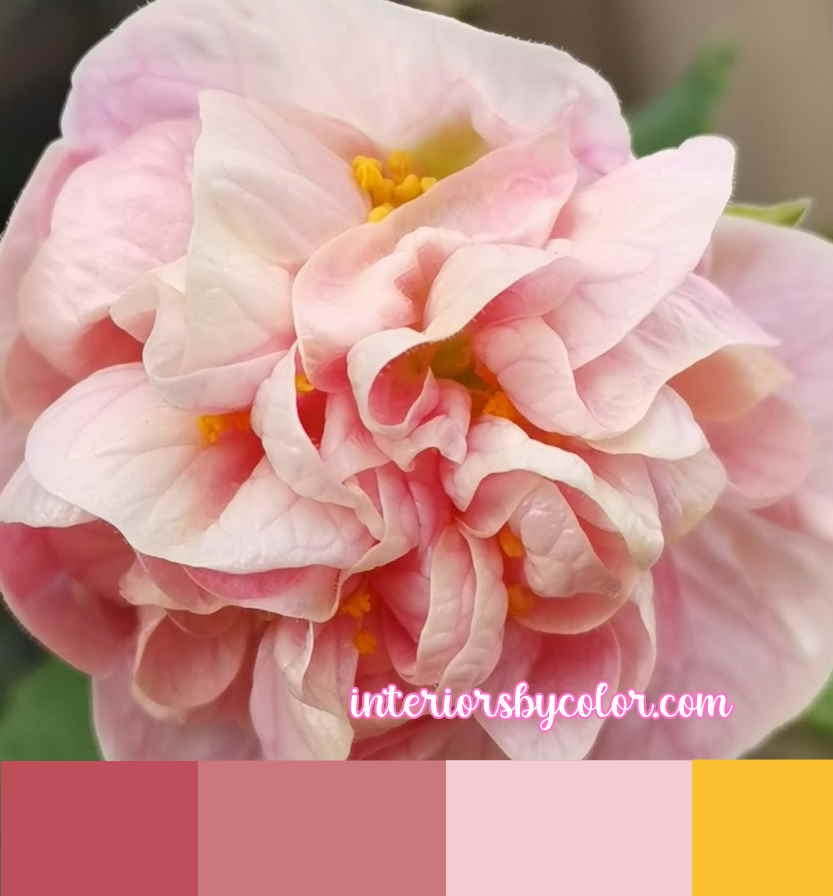 Flower Color Scheme in Pink and Yellow