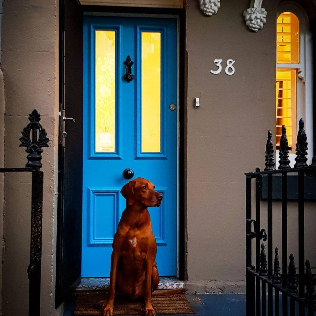 Dulux Cousteau blue front door paint color
